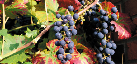 Fall into the season with GAYOT's Quarterly Wine Newsletter