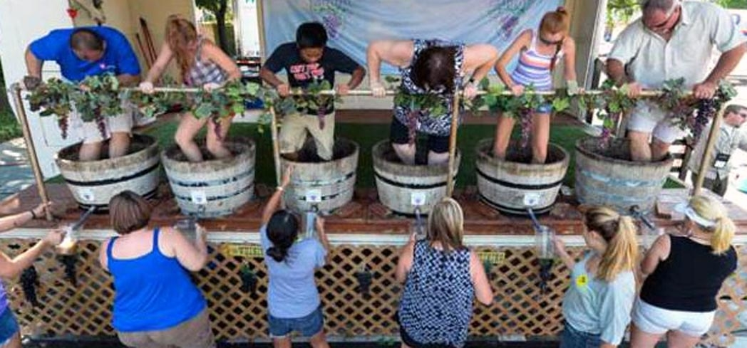 The popular GrapeStomp at Grapefest