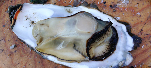 Check out GAYOT's picks of the best aphrodisiac foods