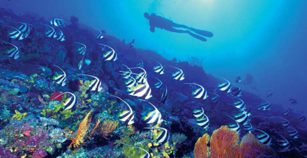 A scuba diving excursion