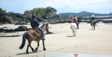 Horse treks on the beach at The Lodge at Kauri Cliffs