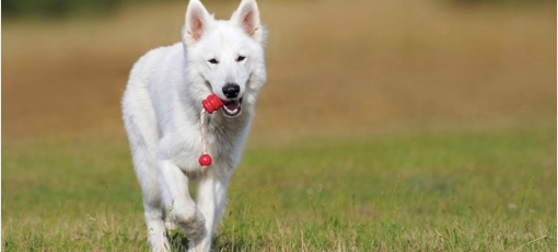 Make your pooch feel super special with these Best Gifts for Dogs