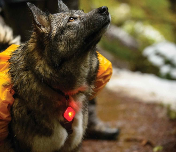 Never lose sight of your dog with Ruffwear's The Beacon