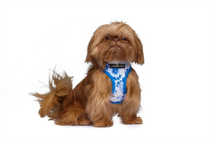 Walk your dog in style in one of Urban Pup's cute harnesses