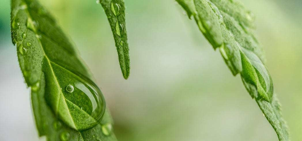 Hemp is changing people's minds with its many health benefits