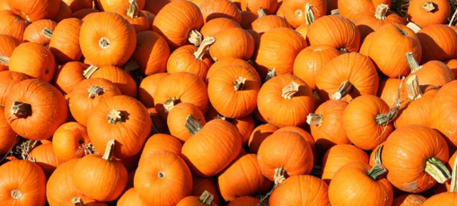 Pumpkins offer many health benefits