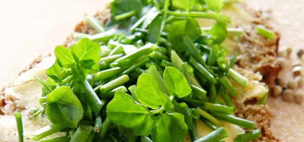 Watercress is loaded with health benefits