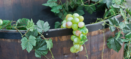 Check out GAYOT's selections of the top organic wines