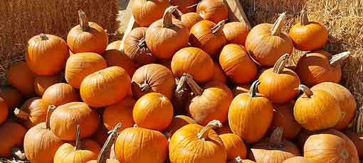 There are many health benefits to eating pumpkin