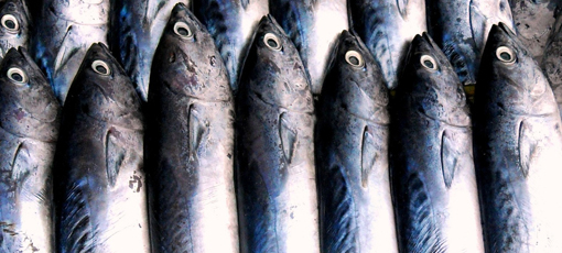 GAYOT has the details on the risks of mercury in fish