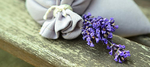 Learn about all the healing benefits of lavender with GAYOT's guide