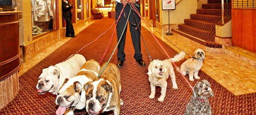 San Francisco's Best Hotels for Pets