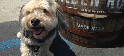 Top 10 Dog-Friendly Restaurants in Los Angeles