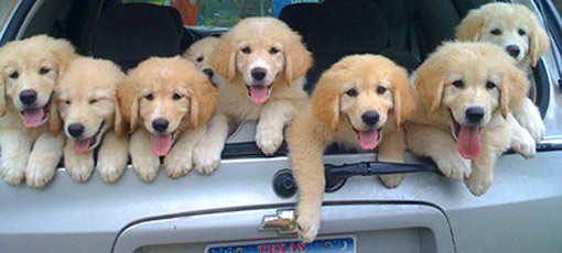 Find your next dog-friendly car with GAYOT's guide