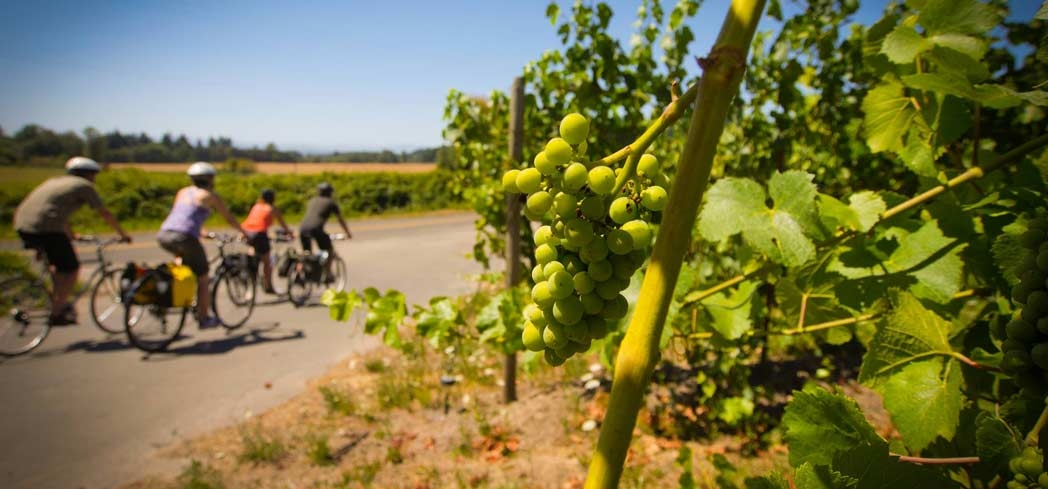 Willamette Valley is Oregon's wine country - Photo by Path Less Pedaled