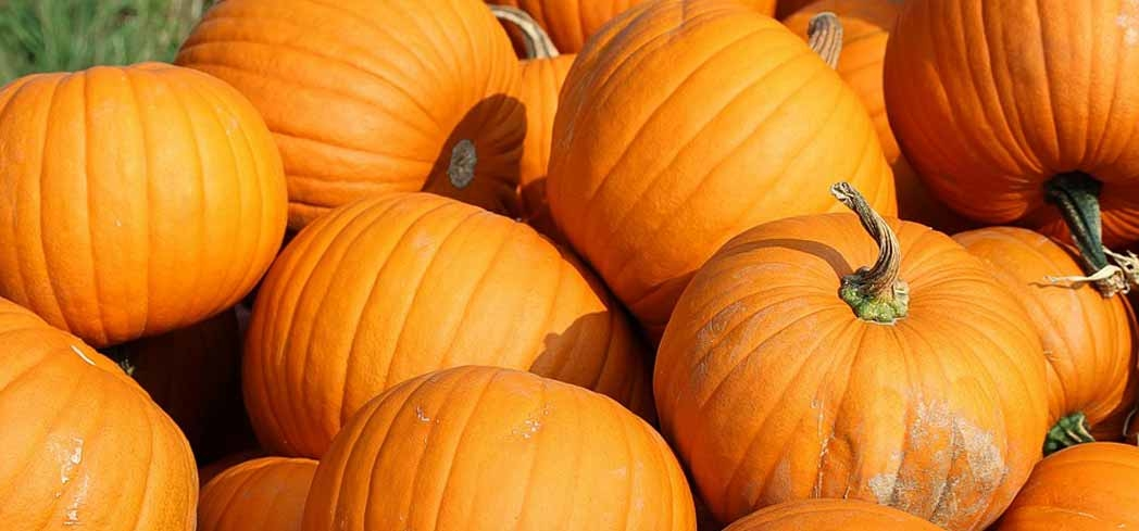 Find out why eating pumpkins is good for your health