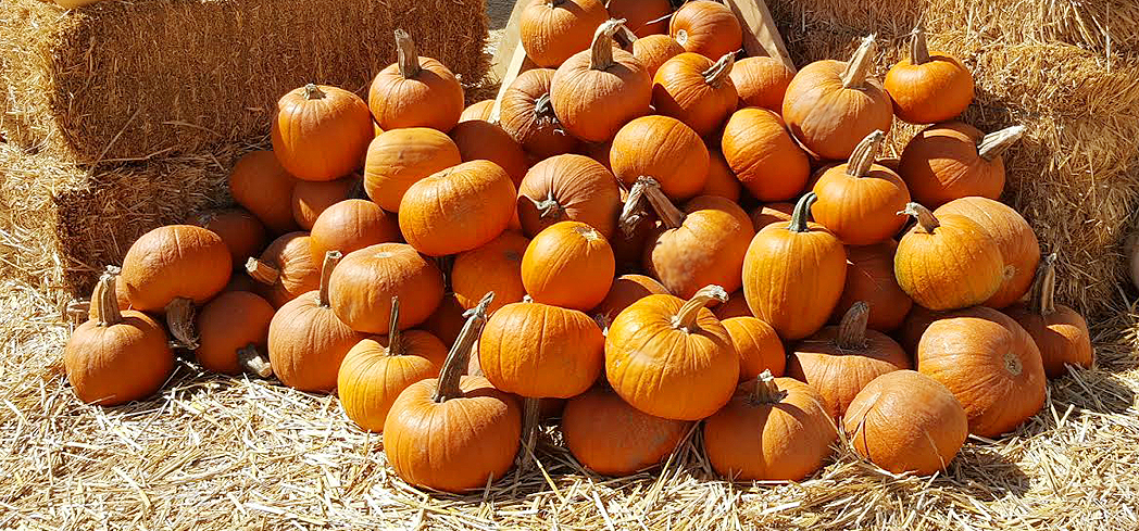 More than just for jack-o-lanterns, pumpkins are loaded with health benefits