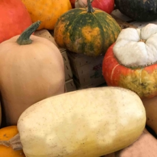 Pumpkin & squash recipes for fall