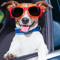 Take Fido on a road trip with GAYOT's Top 10 Dog-Friendly Cars