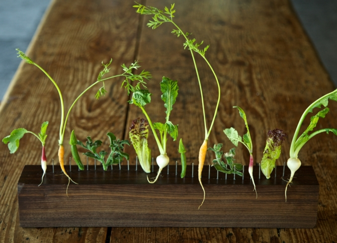 Blue Hill at Stone Barn: Seasonal Vegetables (photo Irene Hamburger)