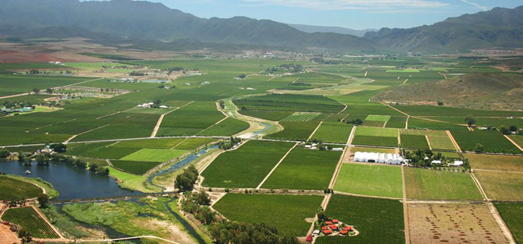This South African road is one of the longest and most varied wine routes in the world
