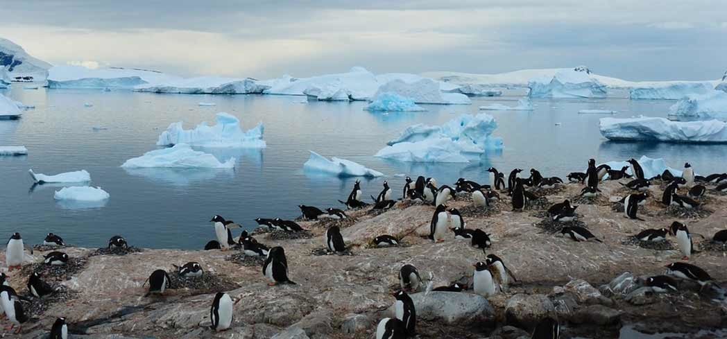 Penguins are the main inhabitants of Antarctica