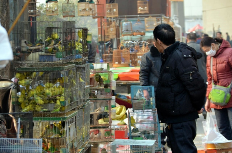 Get an authentic shopping experience in China at Beijing Flower Bird Fish and Bug Market