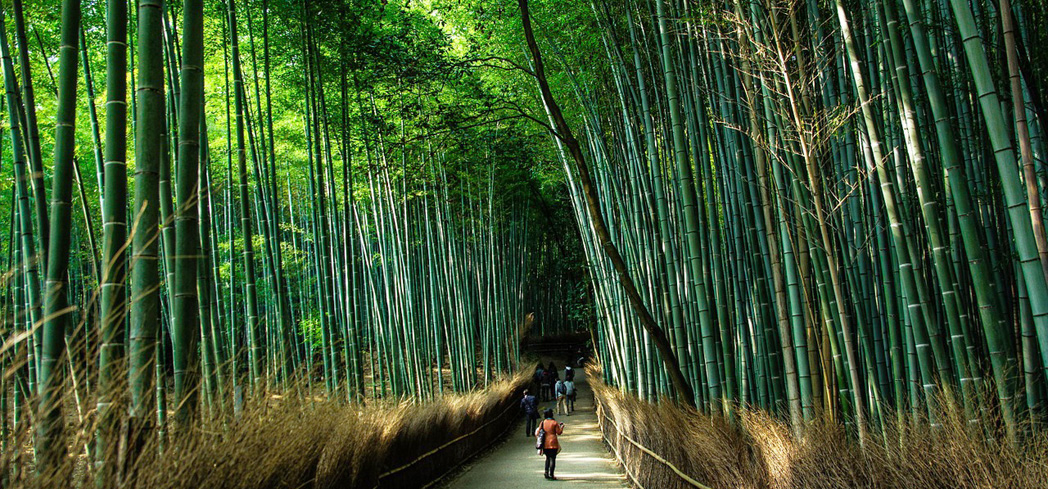 This sprawling, bamboo forest-lined path is one of the city's most photographed sights