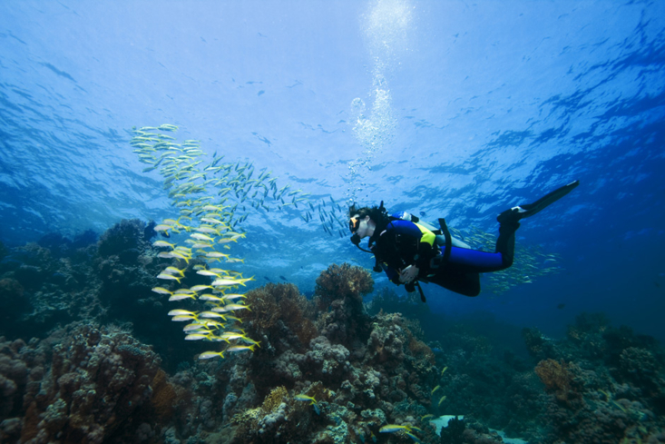 Diving in the Deep South reef of Anguilla