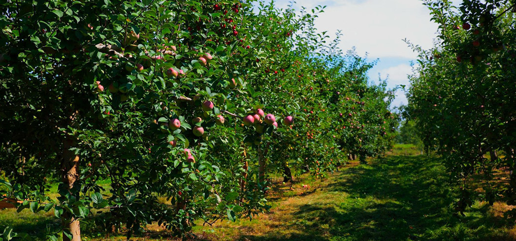 The Cidrerie Verger Bilodeau orchard