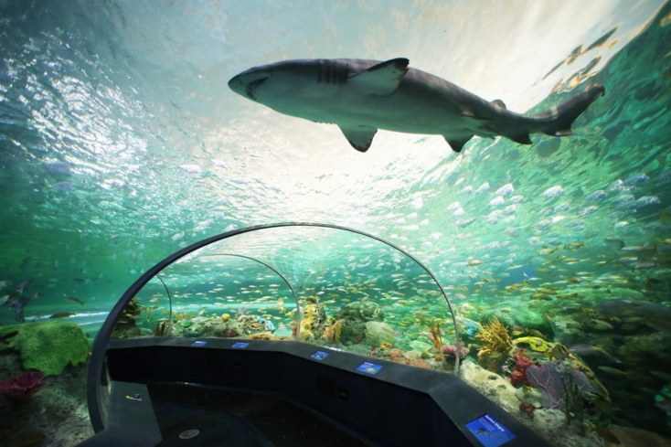 The Dangerous Lagoon at Ripley's Aquarium of Canada in Toronto