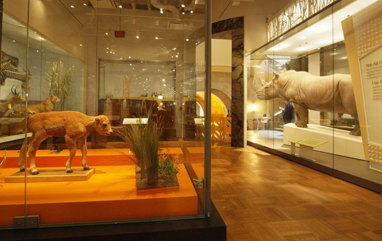An exhibit at the Royal Ontario Museum in Toronto