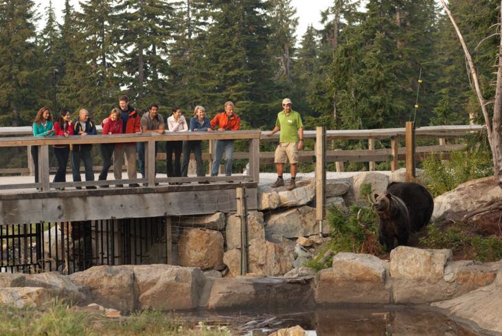 There are plenty of activities to do in summer or winter at Grouse Mountain in Vancouver, British Columbia