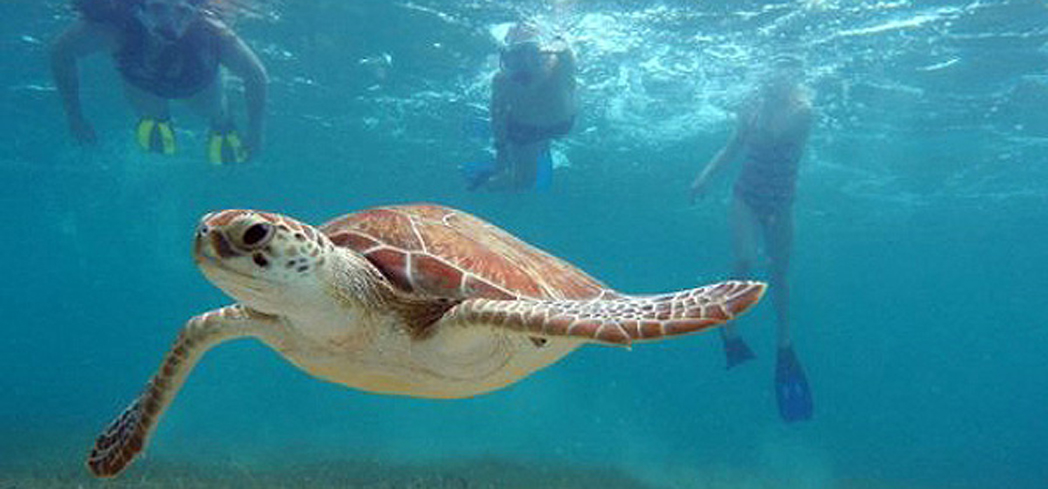 "Akumal means ""place of the turtles"""