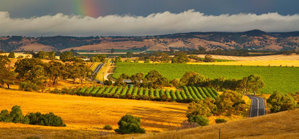 The Barossa boasts some of Australia's most famous vineyards