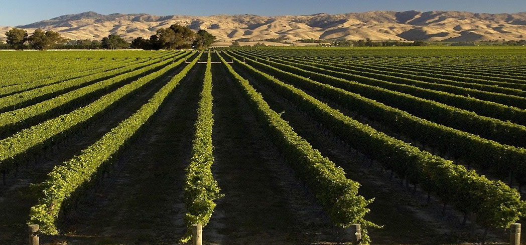 Discover 80 percent of New Zealand's wine country along this trail