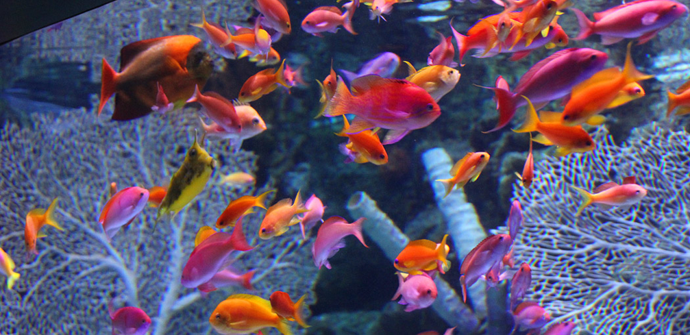 Some of the attractions at the Aquarium of the Pacific