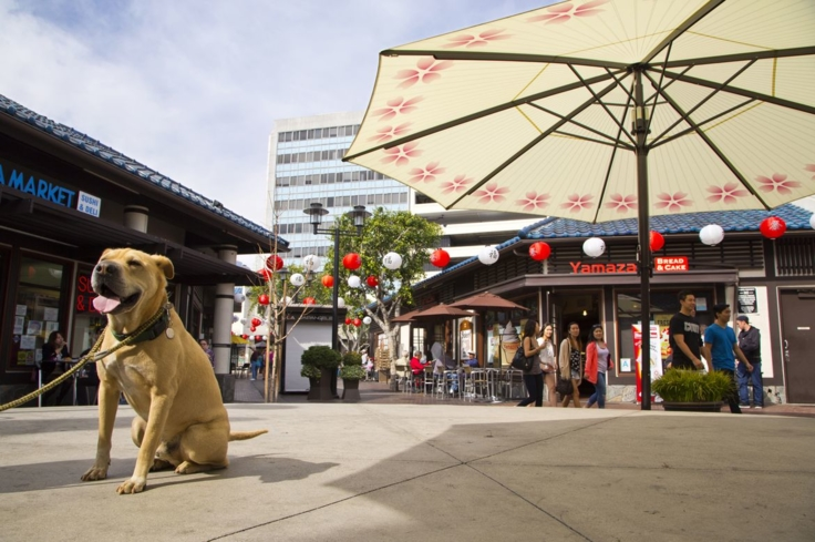 Visitors can peruse the shops and restaurants at the Japanese Village Plaza in Little Tokyo