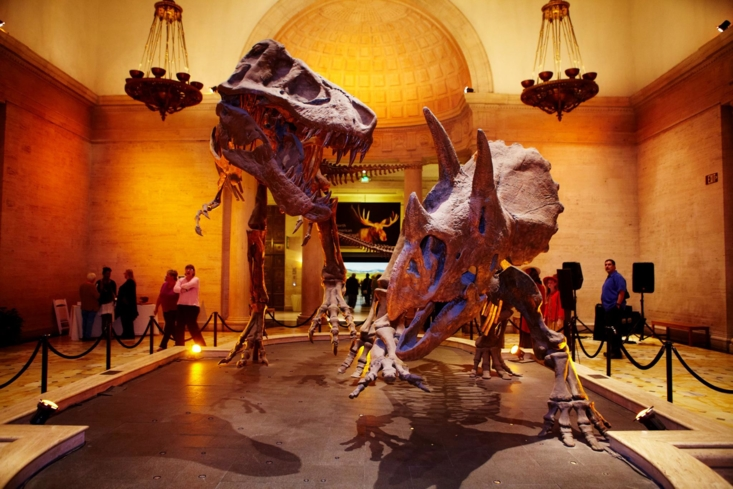 The dueling dinosaurs in the entry hall of the Natural History Museum of Los Angeles County