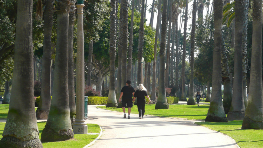 Lush green grass and tall palm trees make up the scene at Palisades Park