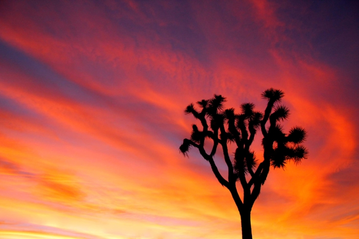 Joshua Tree National Park (photo credit NPS/Brad Sutton)