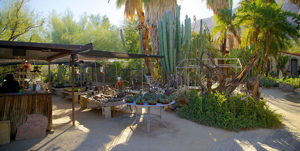 Explore desert plant life at Moorten Botanical Garden and Cactarium in Palm Springs, California
