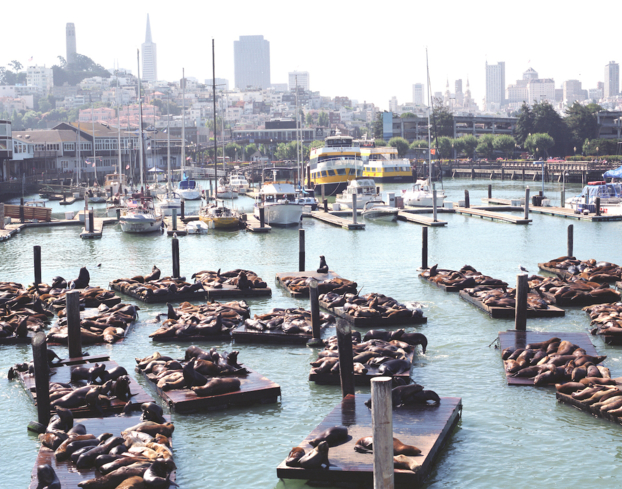 Sea lions sunbathing at Fisherman's Wharf