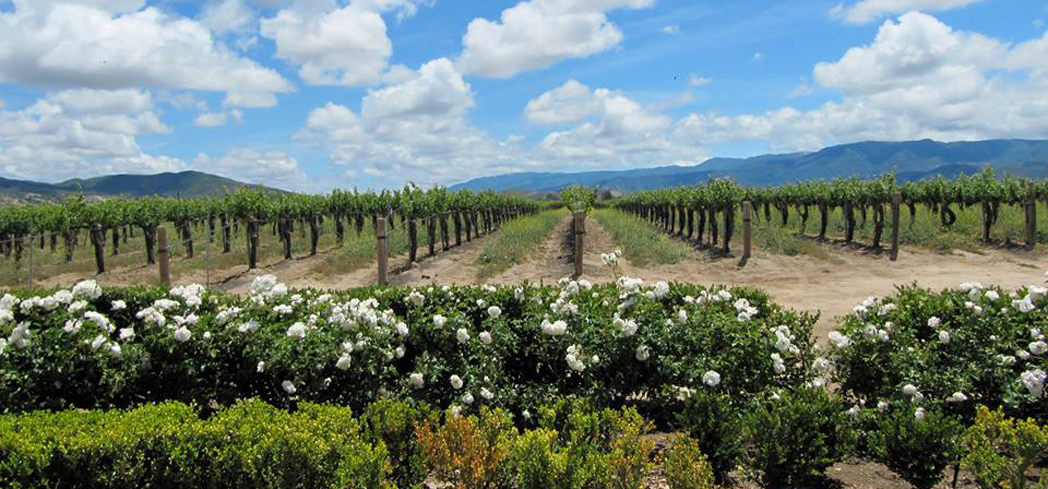 Temecula Valley Wine Country is nestled between Los Angeles and San Diego counties
