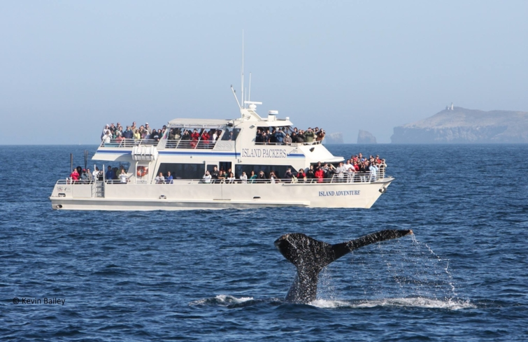 Island Packers offers a variety of fun ways to explore Anacapa and the Santa Cruz Islands