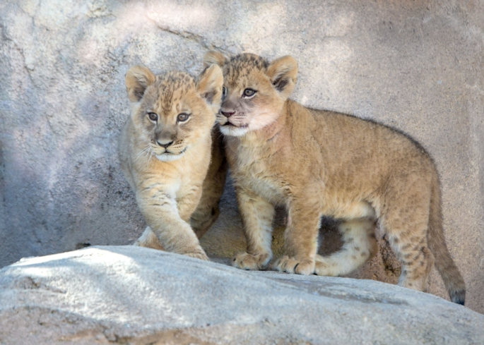 See wildlife up close at the Denver Zoo