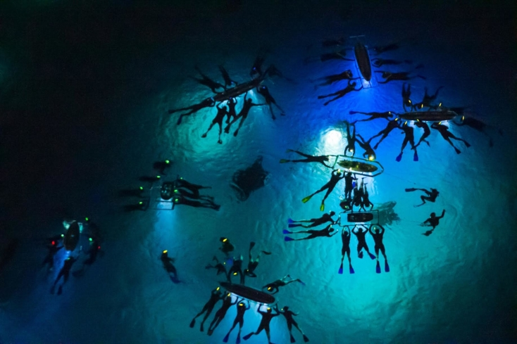 Experience the once-in-a-lifetime adventure of diving in the nighttime ocean to see Manta Rays
