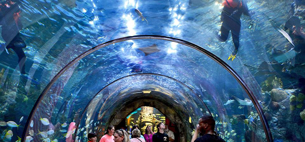 The aquarium showcases a colorful array of exhibits