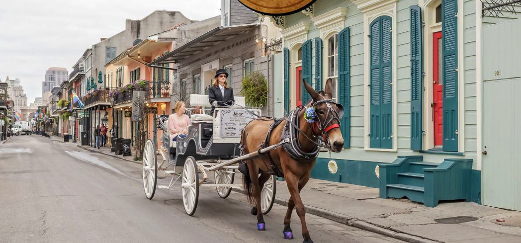 Touring by carriage is the best and most unique way to view the French Quarter