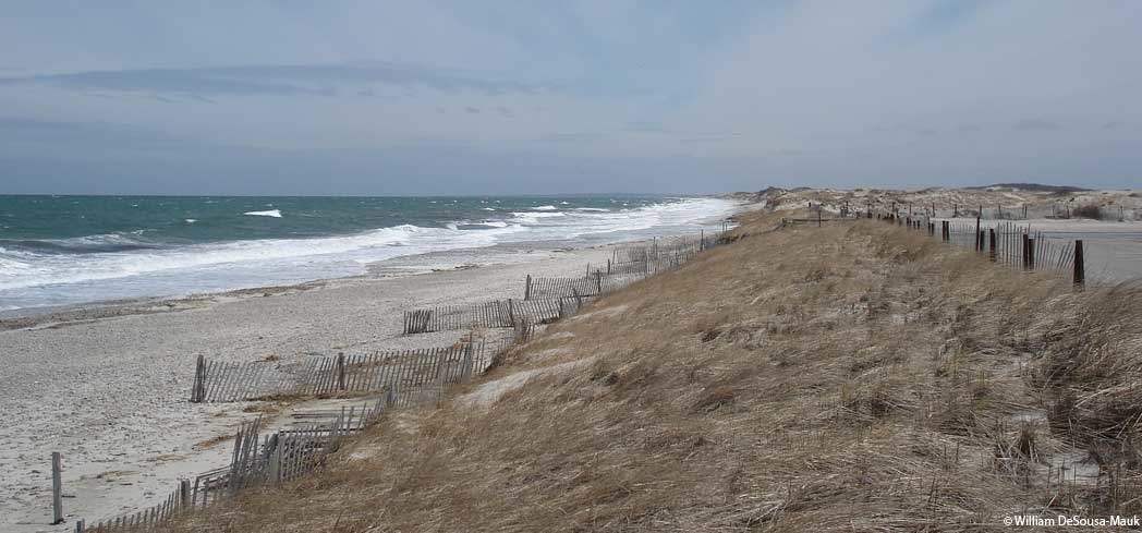 Take in the scenery at Sandy Neck Beach